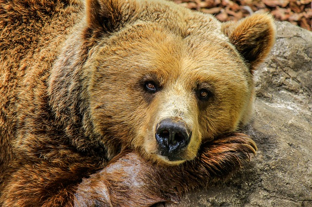 Wildlife Grants in Wyoming